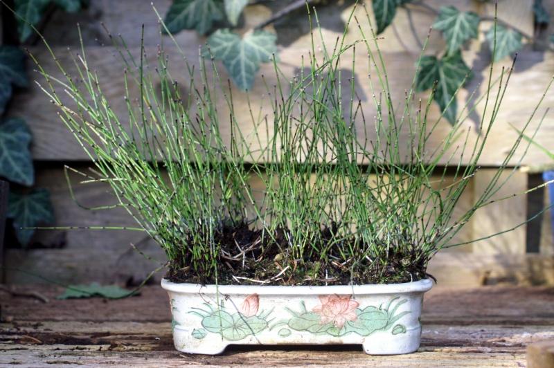 Voici mes plantes d'accompagnements Pict0014