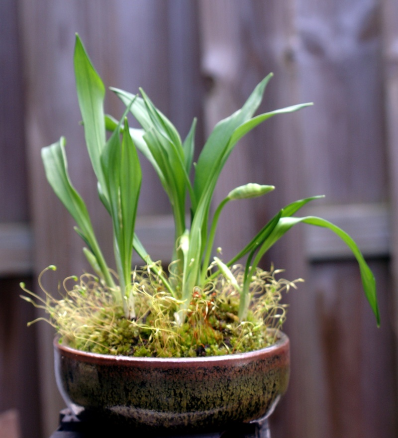 Voici mes plantes d'accompagnements Pict0110