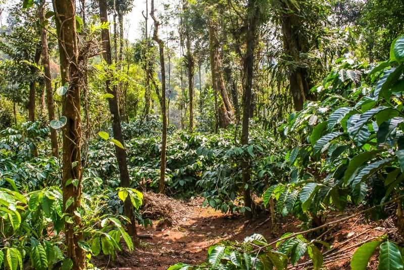 Wald am Berg Wald_a10