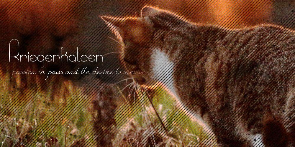 Kriegerkatzen