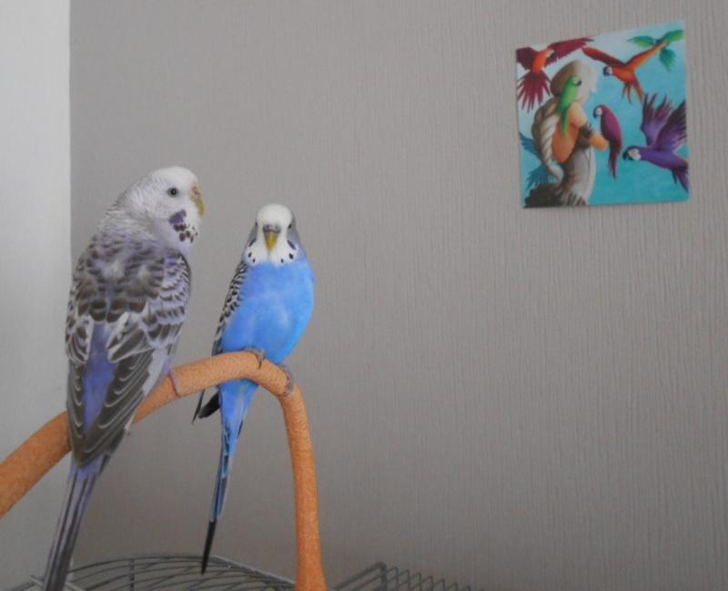 Mes colocataires à plumes ! - Page 4 Dscn1417