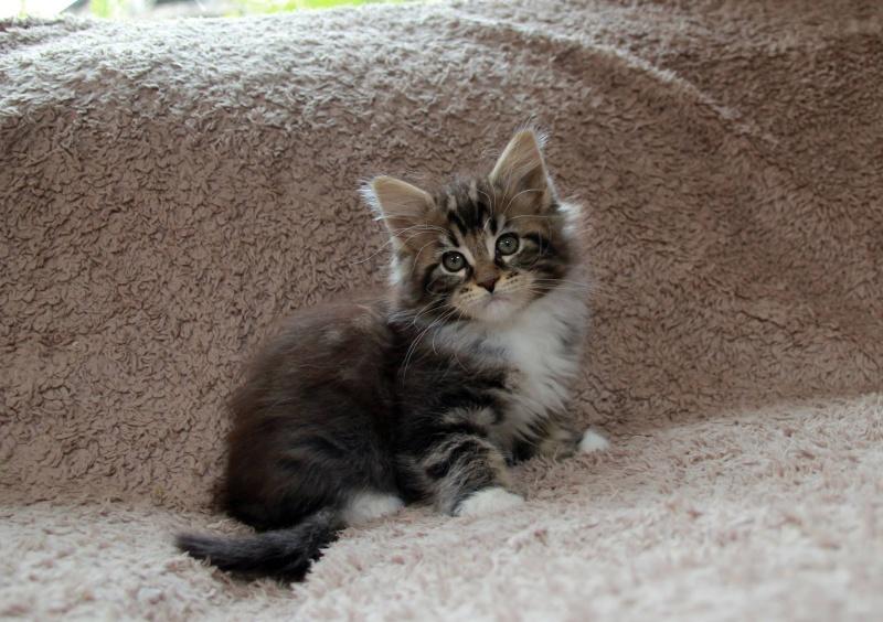 La famille CAT'S 13221210