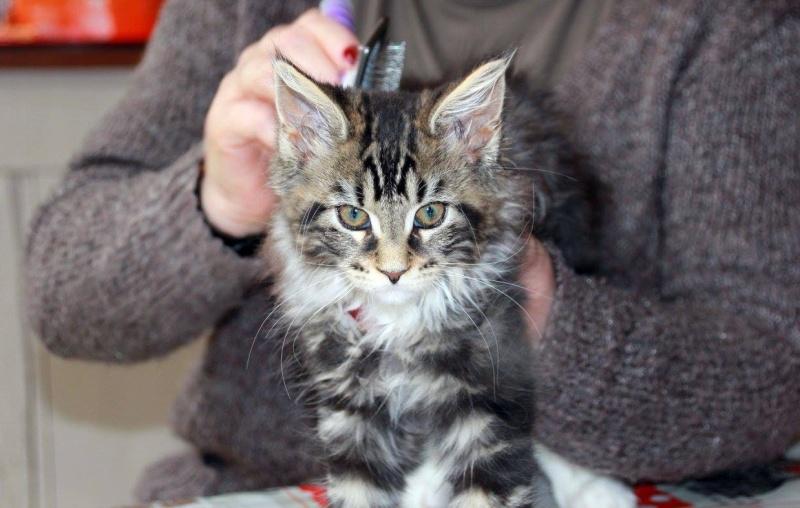 La famille CAT'S 13317010