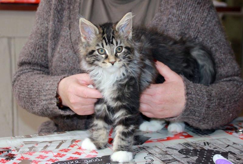 La famille CAT'S 13340110