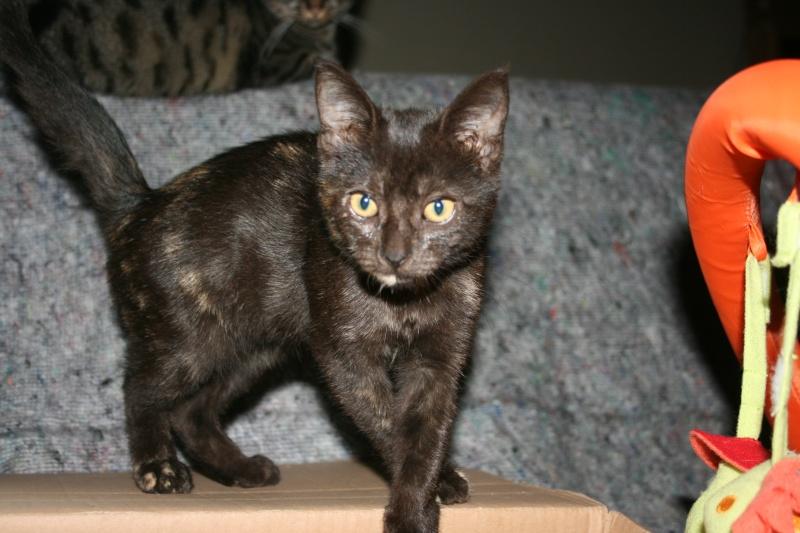 La famille CAT'S Img_5415