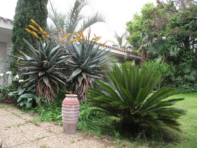 Pierre - Jardin d'acclimatation privé : l'Oasis (66) - Page 9 Aloe_m10