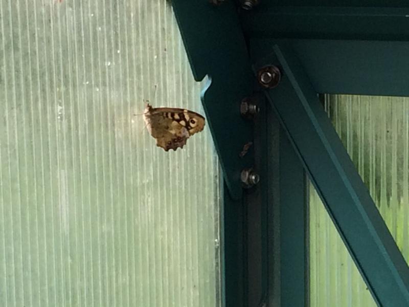 Serre à papillons. - Page 4 Img_0823