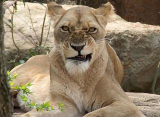Les membres en animaux, c'est cool. A-lion10