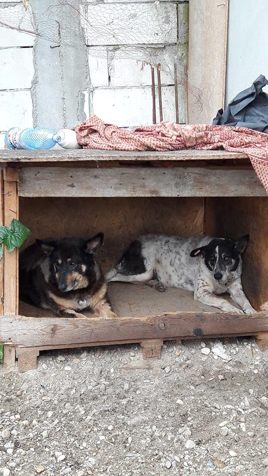 Voyage en Roumanie Juin 2016 13331010