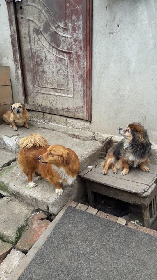 Voyage en Roumanie Juin 2016 13344610