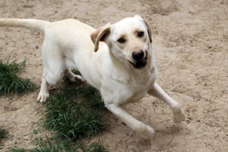 Parrainage tests sanguins et pensions refuge de Backa  et chiens prêts à partir sans solution - Page 3 B_41010