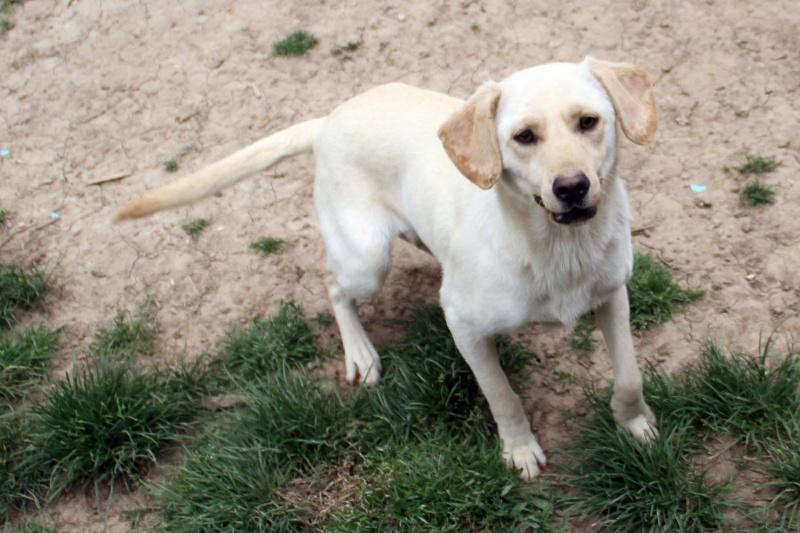 Parrainage tests sanguins et pensions refuge de Backa  et chiens prêts à partir sans solution - Page 3 B_51010