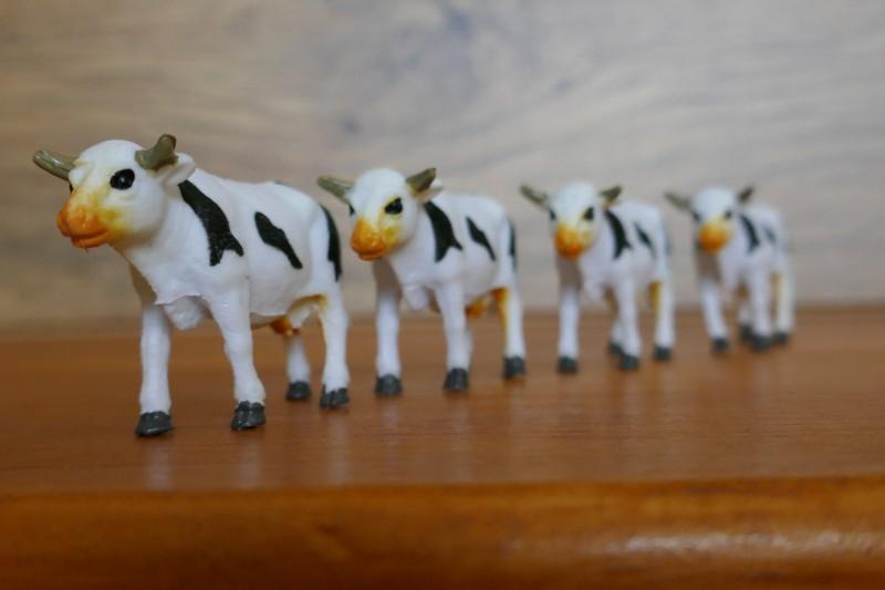 TZ100 - Oh les vaches !! Post Focus et empilage des photos 110