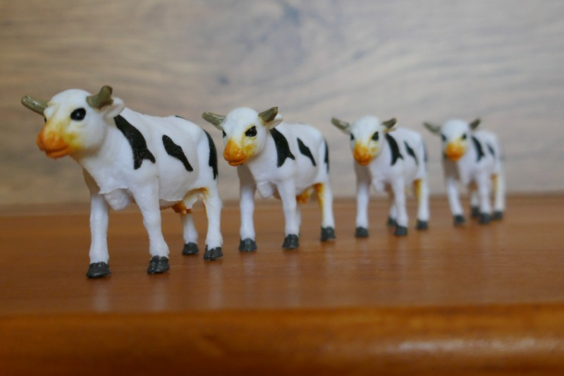 TZ100 - Oh les vaches !! Post Focus et empilage des photos 210