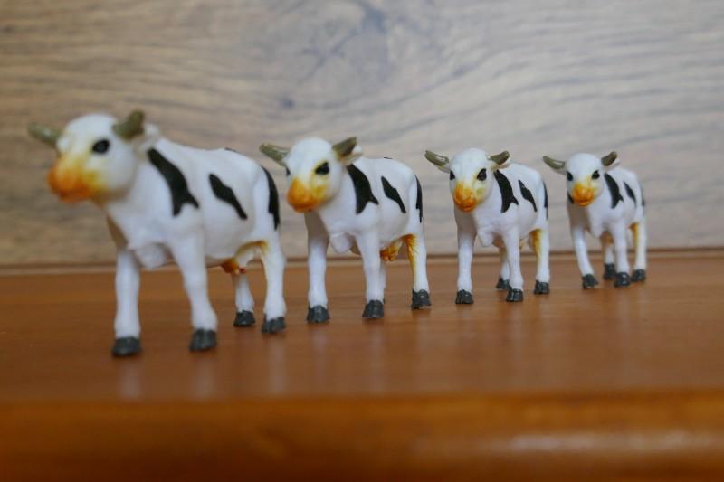 TZ100 - Oh les vaches !! Post Focus et empilage des photos 510