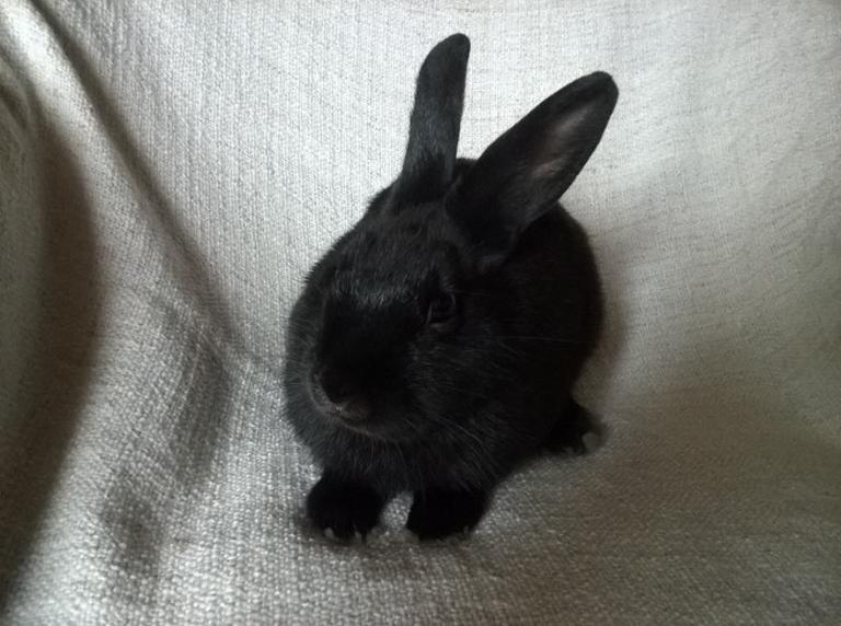 PETIT MARCEL bébé lapin mâle - Page 3 V_32ba10