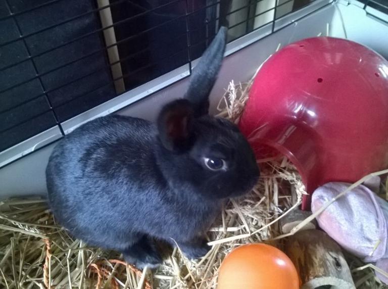 PETIT MARCEL bébé lapin mâle - Page 3 V_673c10