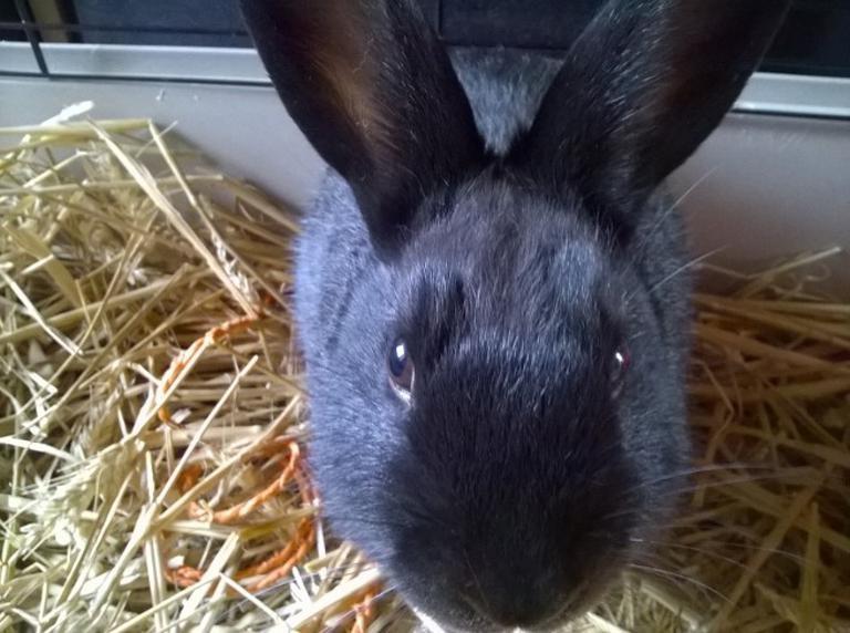 PETIT MARCEL bébé lapin mâle - Page 3 V_b41510