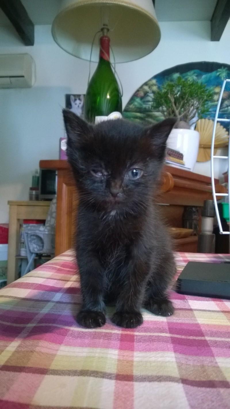 Maëlig, femelle européenne noire estimée née 19/04/2016 Wp_20122