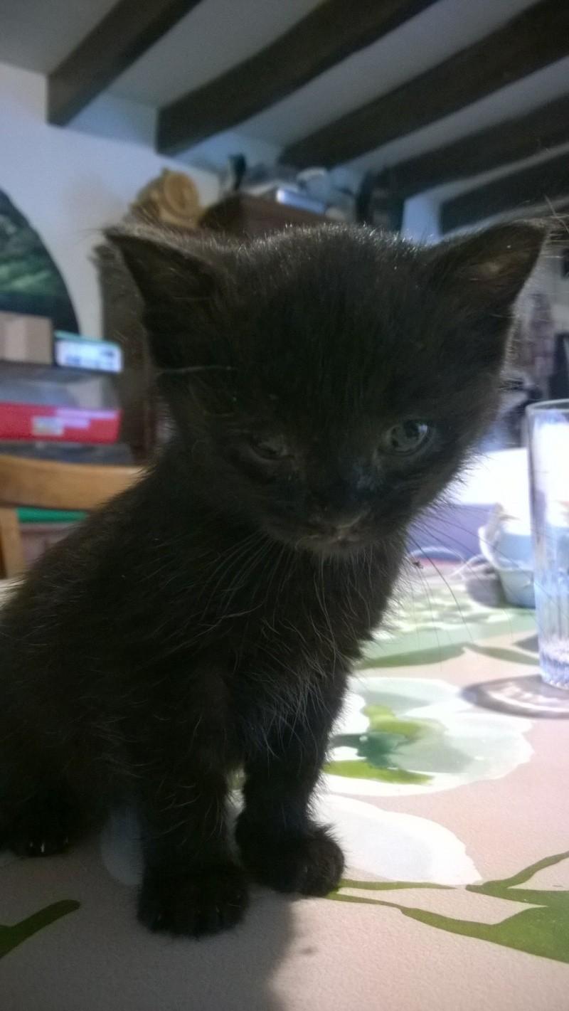 Maëlig, femelle européenne noire estimée née 19/04/2016 Wp_20123