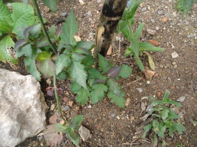 petit arbuste Dsc08241