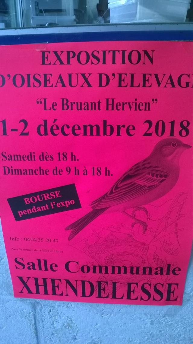 Expo Bruant Hervien [1 et 2 décembre 2018] Bruant10