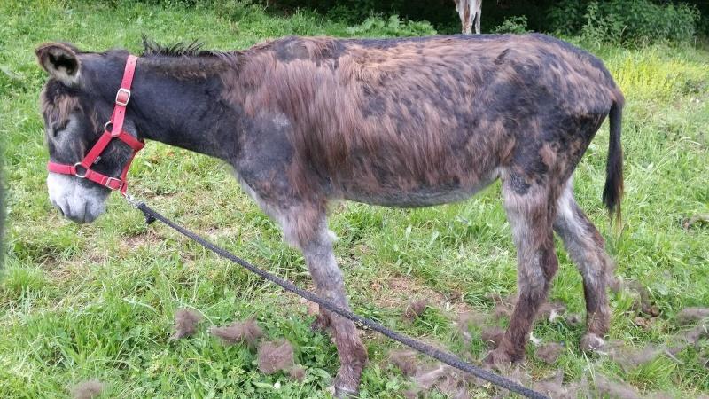ERNESTINE - ONC âne née en 2011 - adoptée en février 2017 par Cécile 20160522