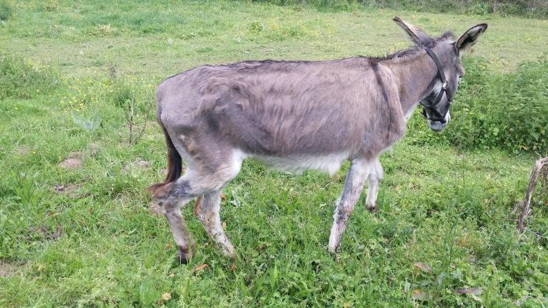 ADELE - ONC âne née en 2009 - décédée avant son adoption, en février 2017 20160523
