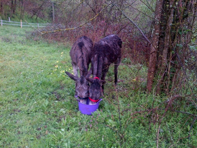 ERNESTINE - ONC âne née en 2011 - adoptée en février 2017 par Cécile Massia11