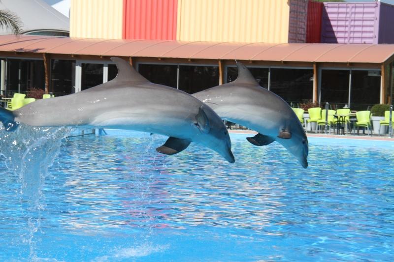 [Photo]Besoin d'aide pour identifié un dauphin, une otarie ? Aa_90710