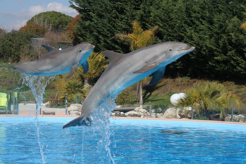 [Photo]Besoin d'aide pour identifié un dauphin, une otarie ? Aa_90711