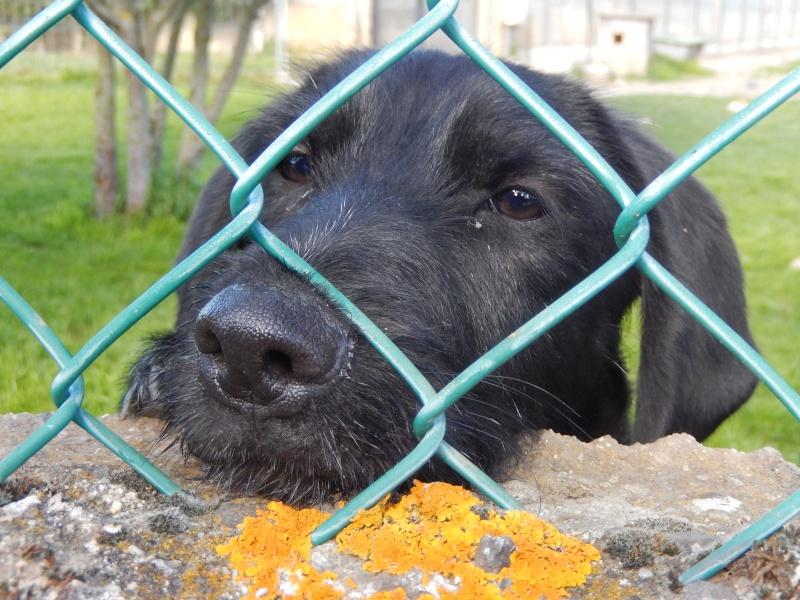 BOLIDE (chien croisé teckel/griffon) Dscn7811