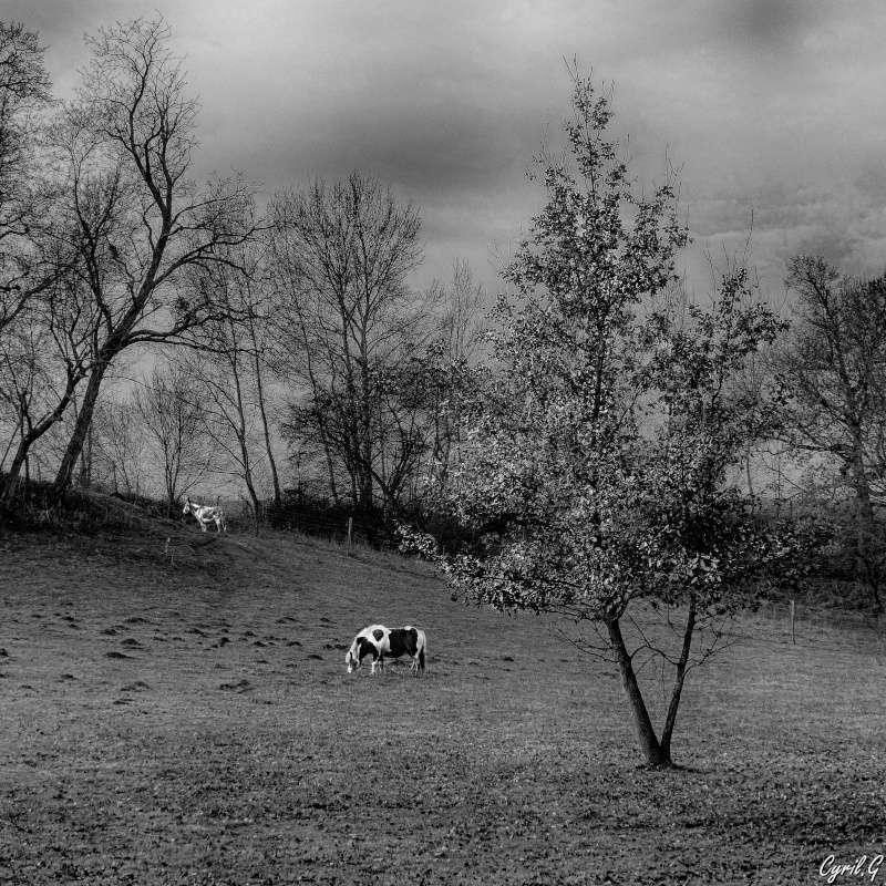 Le chêne et le poney P1040227