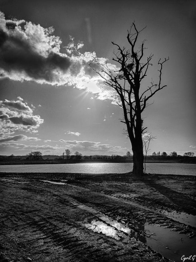 L'arbre de la gravière P1050312