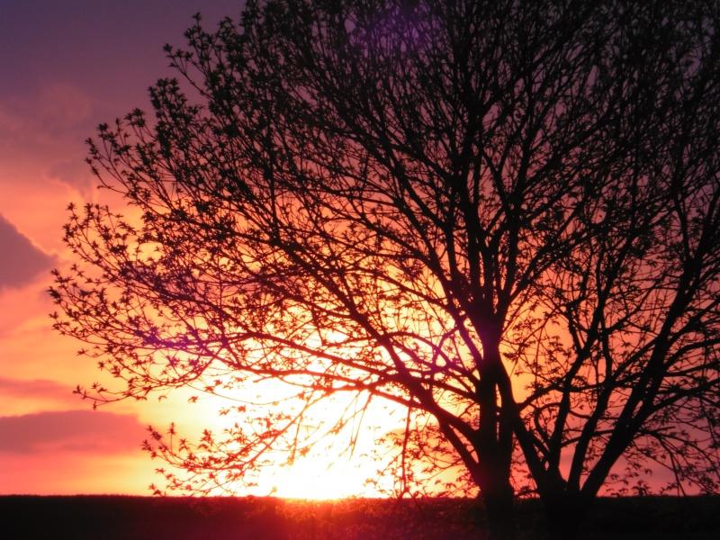 Vos plus belles rencontres avec la nature - Page 38 P1000713