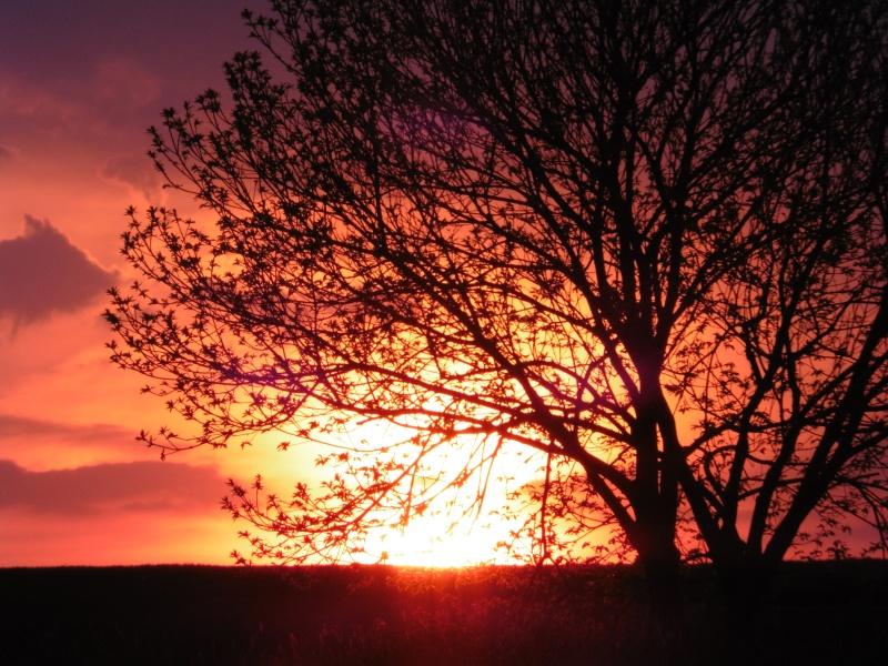 Vos plus belles rencontres avec la nature - Page 38 P1000715
