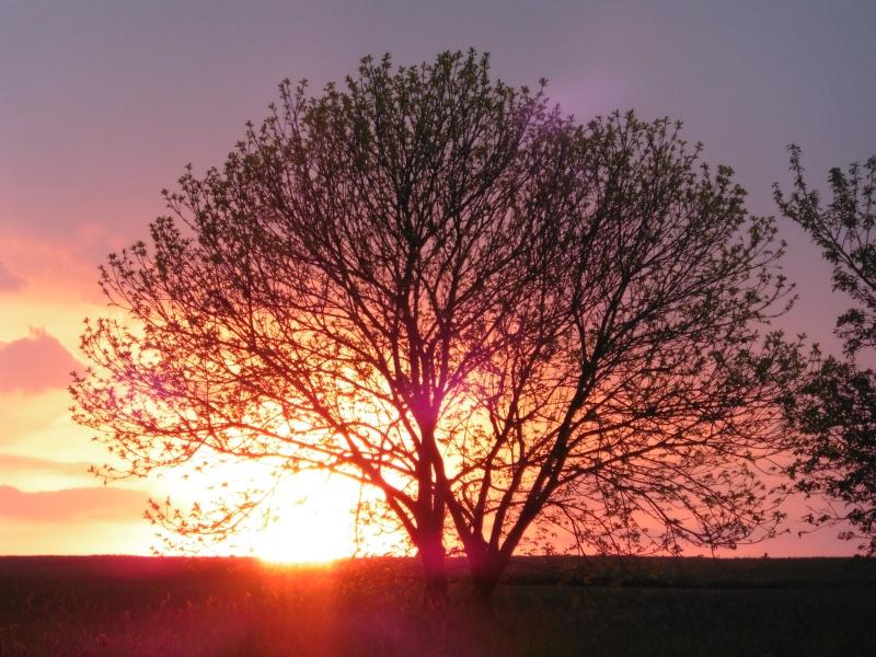 Vos plus belles rencontres avec la nature - Page 38 P1000716
