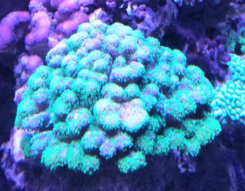vos plus vieux coraux 2016-010