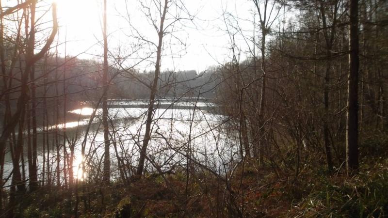 Forêt de Carnelle Sam_6421