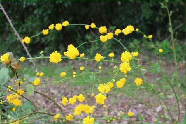 Le ballet jaune !!! 28032015