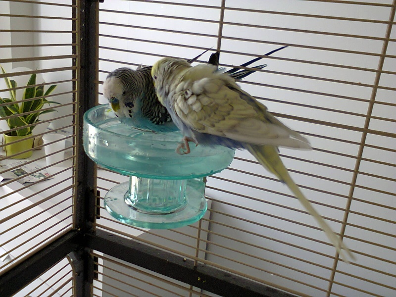 Vive le bain ! Photo011