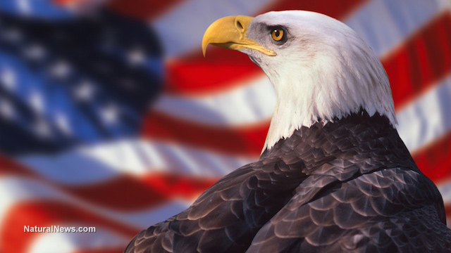 WHAT'S KILLING THE BALD EAGLES? MYSTERIOUS CIRCUMSTANCES SURROUND THE DEATH OF 18 ENDANGERED BIRDS Eagle-10