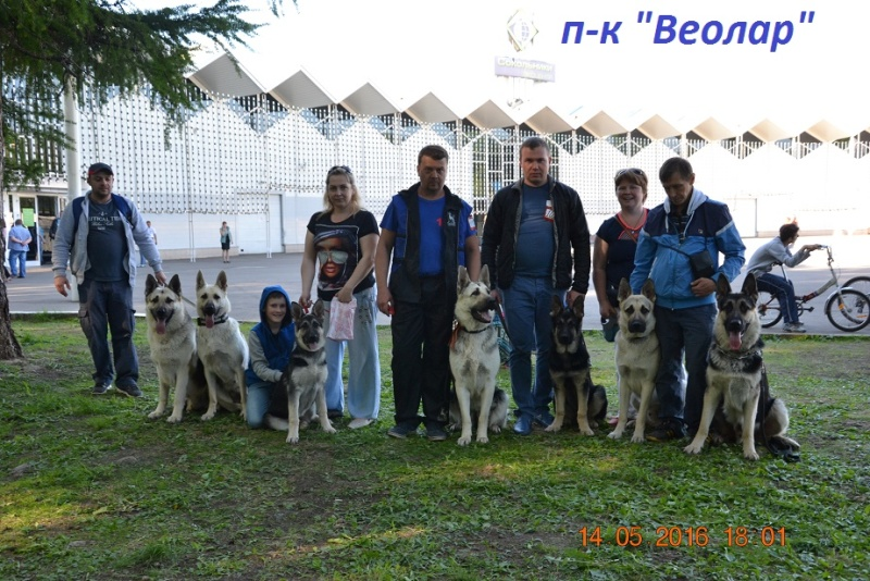 выставки - 14-05-2016 Международные выставки CACIB Dsc_1811