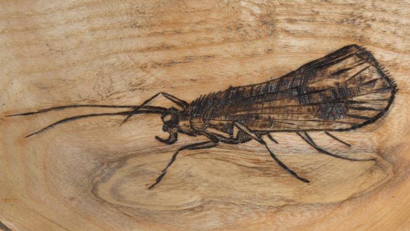 Photos d'insectes  - Page 8 Dsc08410