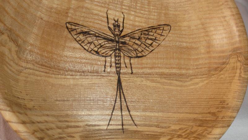 Photos d'insectes  - Page 8 Dsc08412