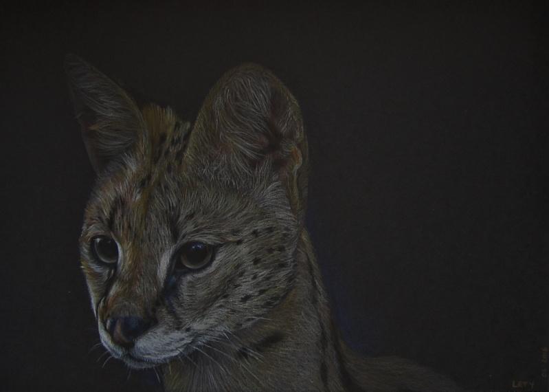 Serval Serval10