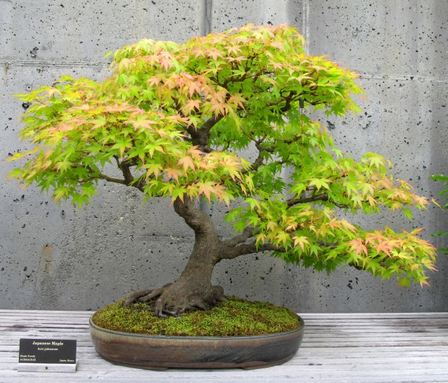American Bonsai at the NC Arboretum - Page 8 Img_0013
