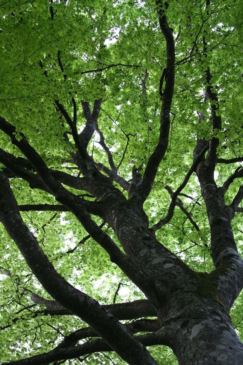 [fil ouvert] la forêt dans tous ses états - Page 5 Img_2645
