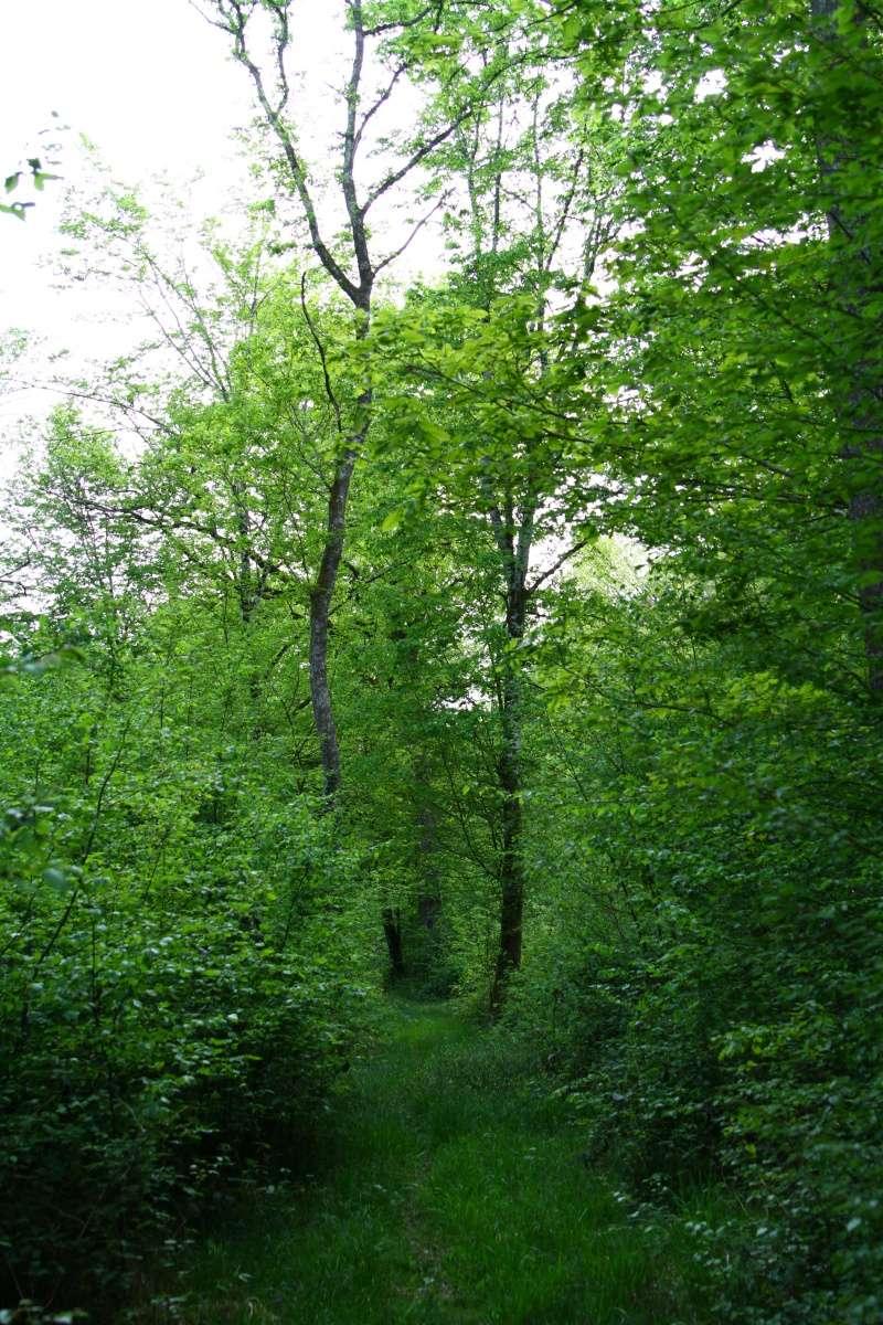 [fil ouvert] la forêt dans tous ses états - Page 5 Img_2646
