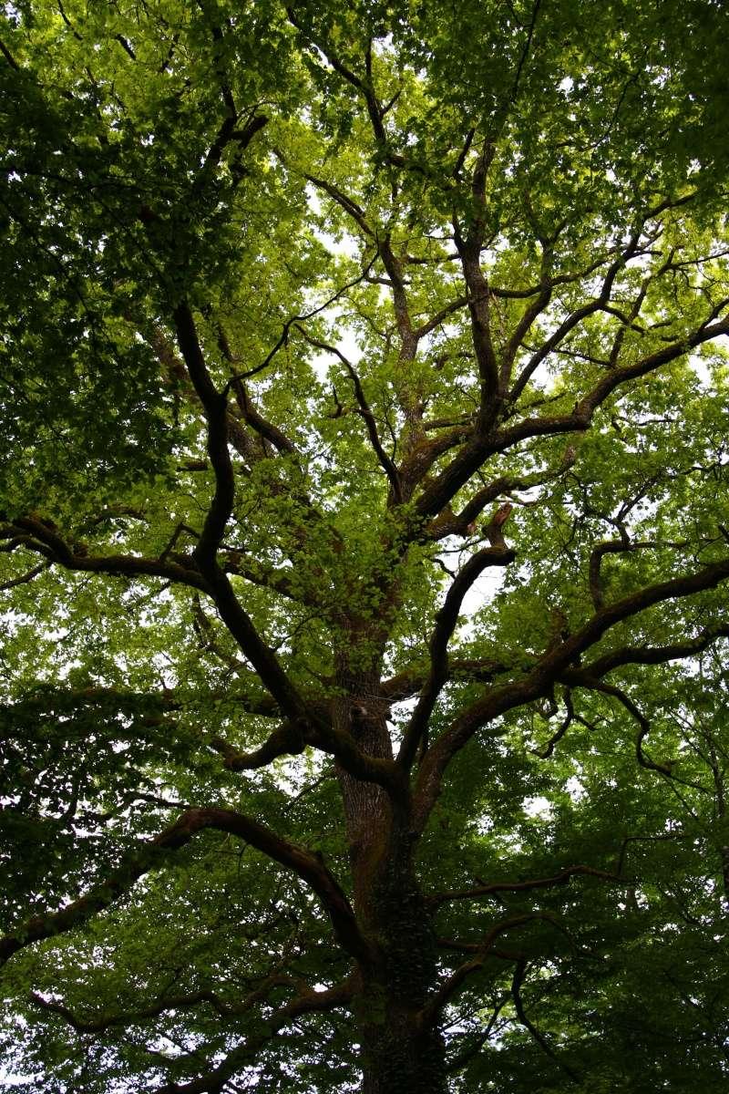 [fil ouvert] la forêt dans tous ses états - Page 5 Img_2647